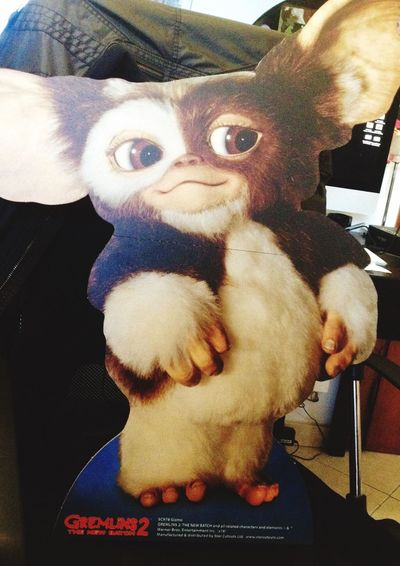 Welcome to home. IT is our new friend. Say hi 😄 Pets Gremlins Gremlin Film Friends Portrait Graphic Love Love ♥