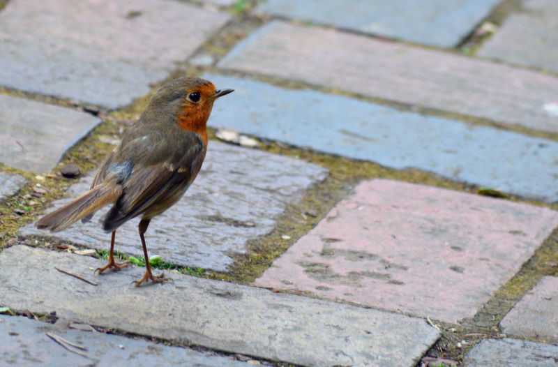 High angle view of bird perching on footpath