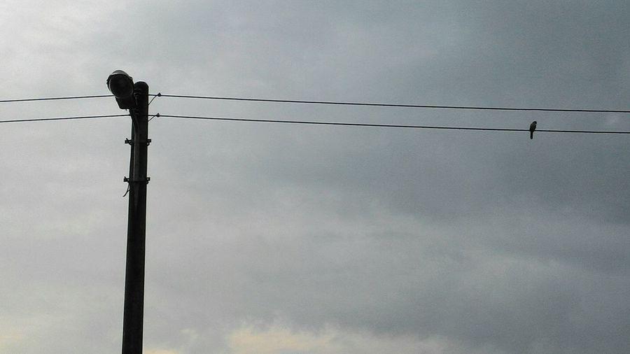 Lonelybird Onthewire Raining Darkclouds Behindmyhouse