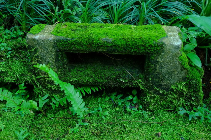 Moss Plant Moss Plant Green Color Nature