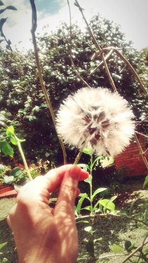 """If you find a dandelion, you have to close your eyes, make a wish, and let that wish fly away..."""