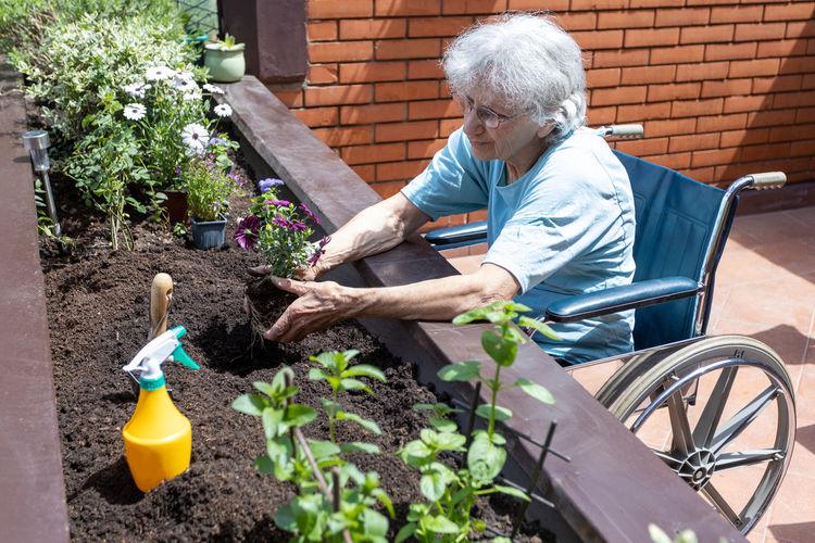 Elderly woman in wheelchair planting flowers in small terrace garden