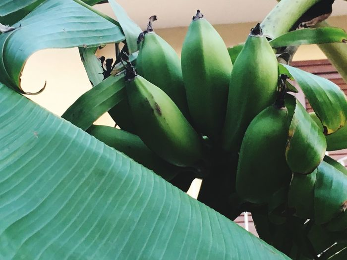 Blooming Green Color Growth Plant Nature Beauty In Nature Growing Leaf Nature Close-up
