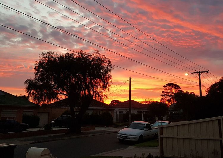 Tree Telephone Line Sunset Cable Car Electricity  Dramatic Sky Sky Cloud - Sky