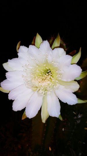 Cactus flower Taking Photos Enjoying Life Beautiful