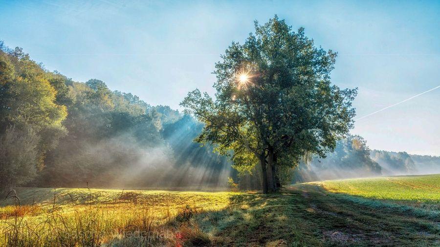 Sun, Fog and