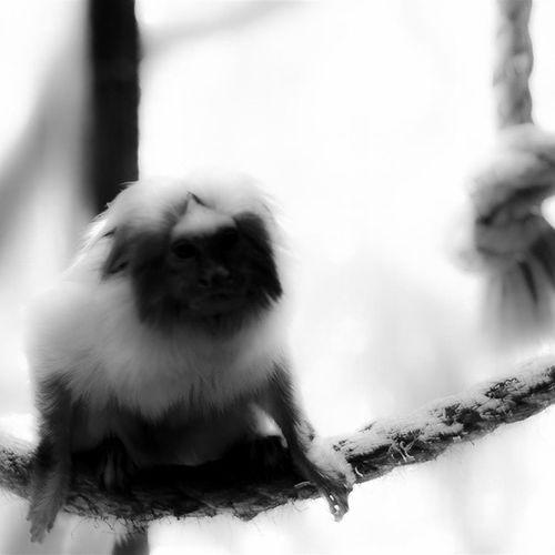Fugindo do óbvio: ir ao Zoo equipado de uma lente fixa 50mm e fotografar em Branco_e_preto (P &b). Gostei do resultado. Usei a Nikon D5100