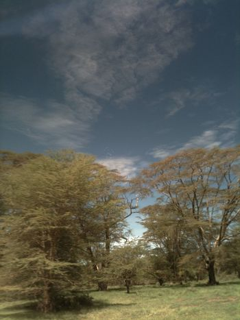 Acacia Tree EyeEm Nature Lover Savannah Sky And Clouds Africa Beauty In Nature Cloud - Sky Day Landscape Nature No People Outdoors Scenics Sky Tranquil Scene Tranquility Tree