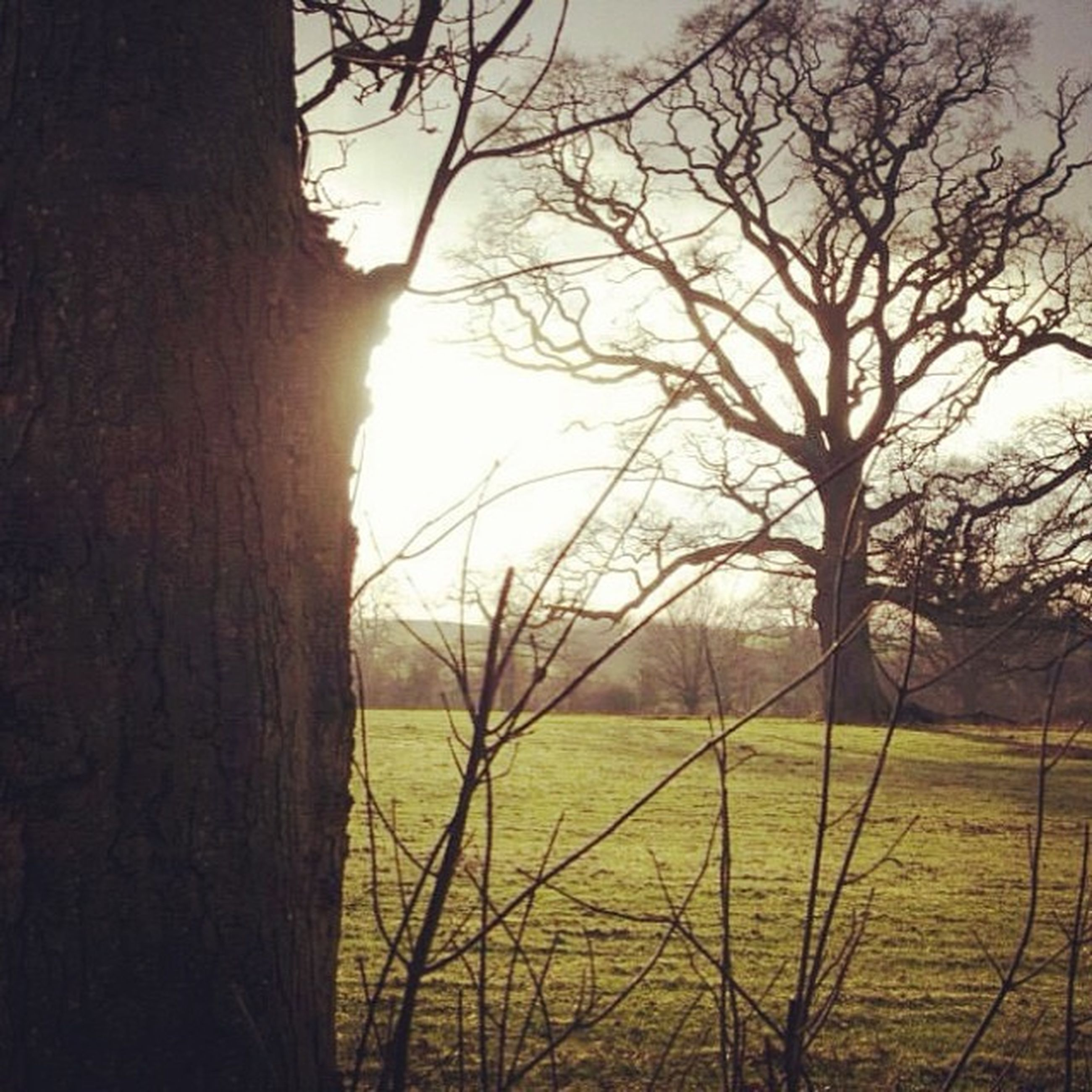 sunset, sun, tree, bare tree, tranquility, tranquil scene, branch, landscape, sky, scenics, field, nature, beauty in nature, silhouette, sunlight, grass, tree trunk, growth, idyllic, lens flare