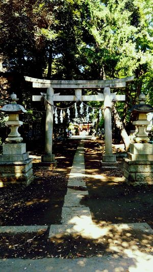 Hometown My Hometown Shrine Japanese Shrine Japanese Culture Second Day In Hometown