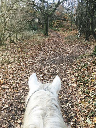 Autumn Nature Outdoors Horse Riding Through Horses Ears