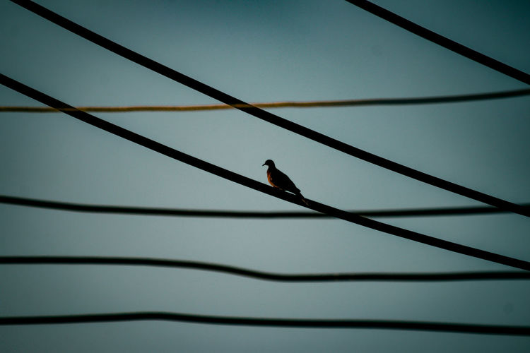 Low angle view of bird perching on a cable