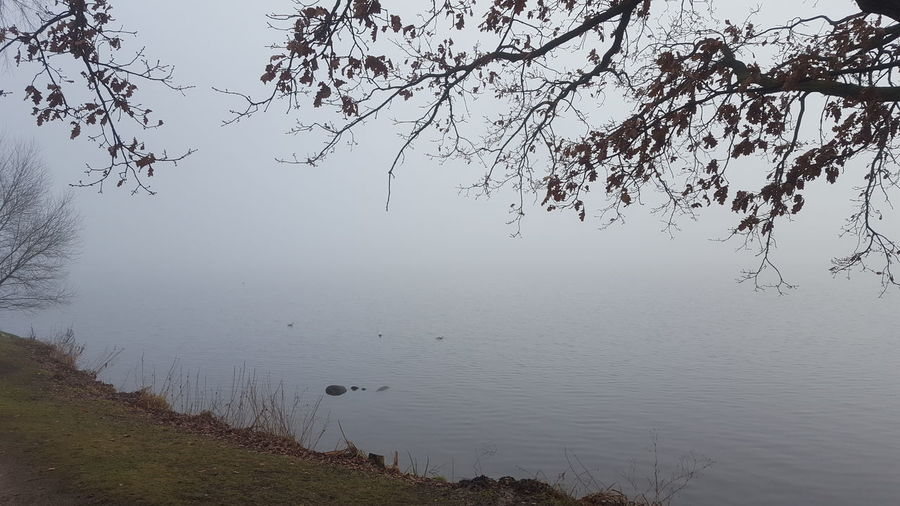 Alster Außenalster Germany🇩🇪 Hamburg Hamburg City January January 2018 Winter Winter Fog Außenalster Beauty In Nature Day Foggy Foggy Day Germany Lake Lake View Mystical Atmosphere Nature No People Outdoors Peaceful Peaceful And Quiet Silence Of Nature Tree Tranquility Tranquil Scene Water Scenics Fog