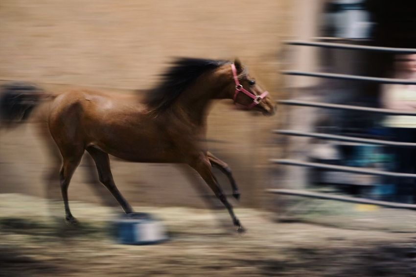 Running Horse Running Horse Speed Running Horse Action In Motion Motion Motion Blur Motion Capture Equine Equine Photography Horses Horse Photography  Panning Capturing Motion Capturing Freedom Capturing Movement