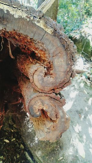 Tree Nature Close-up Textured  No People Day Outdoors Beach Water UnderSea Curl Healing Tree Trunk Dead Tree Dead Cavity Scenics Tranquility Broken Forest Wood Crack Split Split Wood