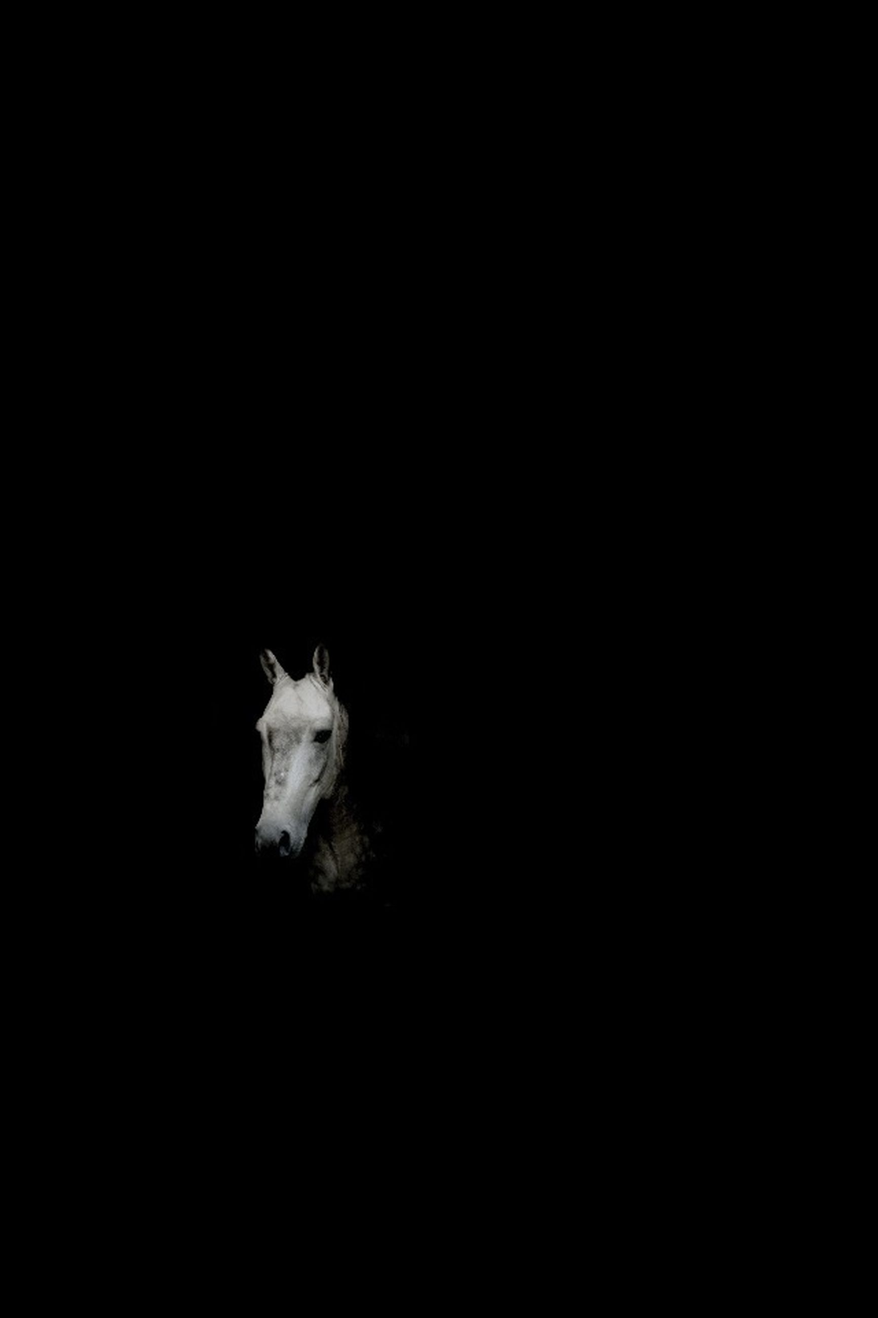 black background, studio shot, copy space, one animal, animal themes, night, cut out, wildlife, close-up, dark, white color, nature, no people, animals in the wild, single object, beauty in nature, white, high angle view, outdoors, vignette