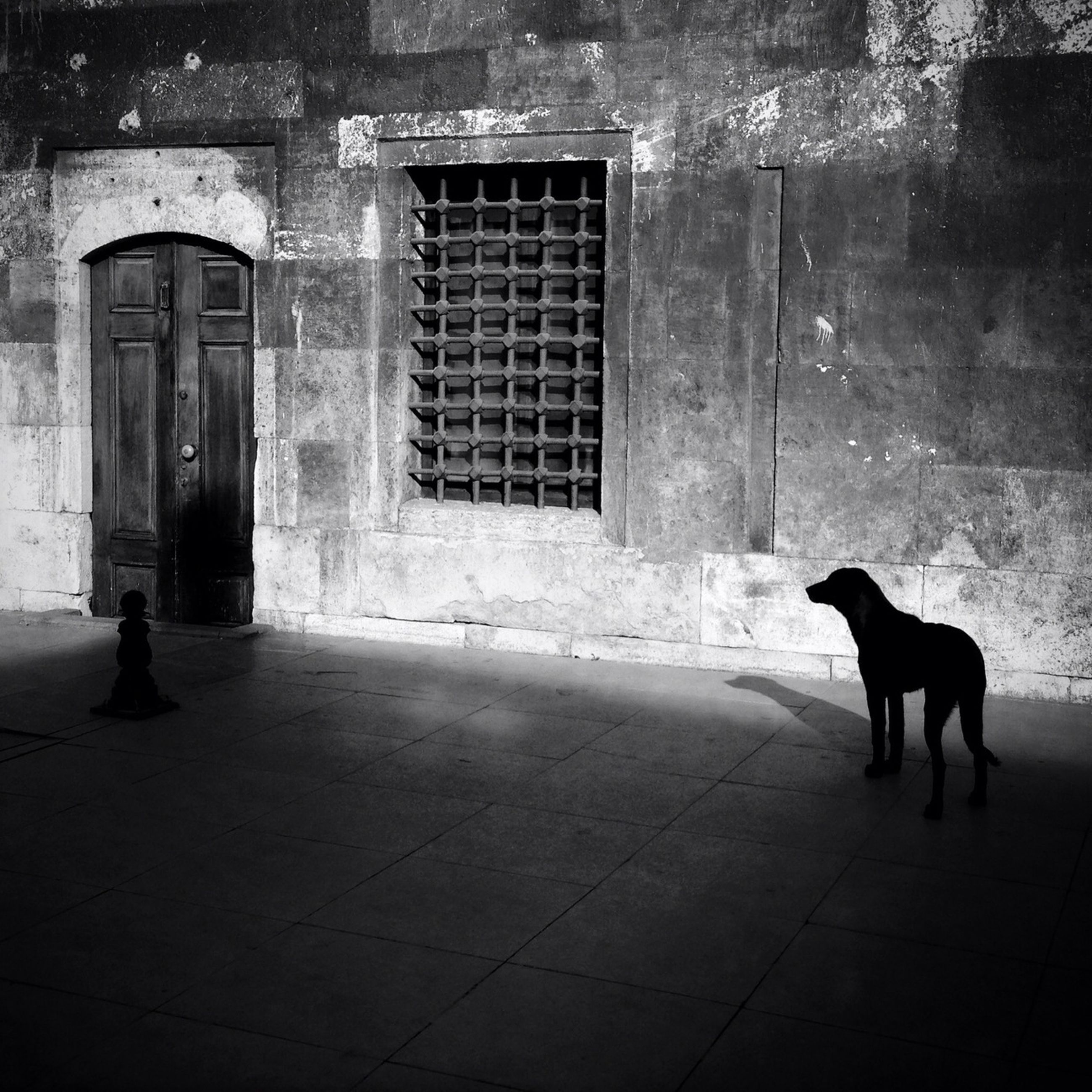 architecture, building exterior, animal themes, built structure, domestic animals, one animal, pets, mammal, house, door, full length, dog, window, street, side view, cobblestone, cat, domestic cat, wall - building feature, walking