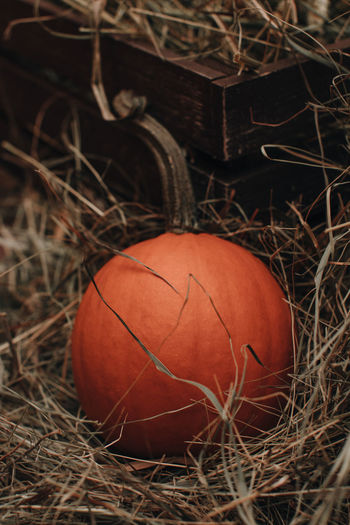Thanksgiving holiday. halloween. orange pumpkin in a hay. farmer's market. autumn vegetables harvest