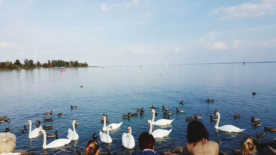 People And Places Animals In The Wild Nature Tranquility Lake Togetherness Water Bird Traveling My Favorite Place Cloud - Sky Blue Taking Photos Travel Photography Erasmus Travel Destinations Tourist Destination Hungary View Eyeemphoto Color Sun