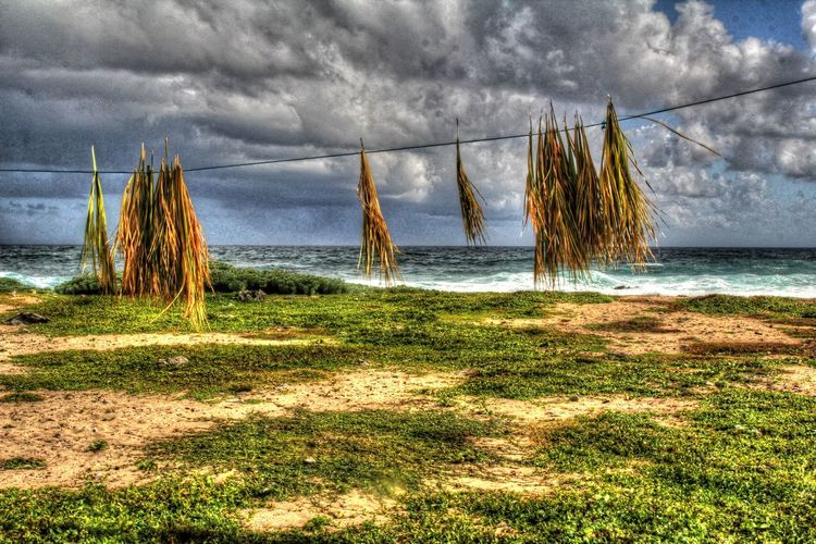 Caribbean Sea Grass Morant Point Clothesline Cloud - Sky Drying Horizon Over Water Nature