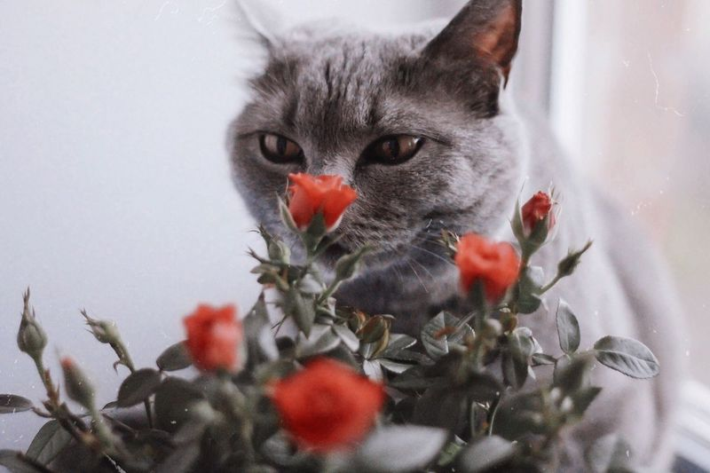 Close-Up Of Cat By Flowering Plant At Home
