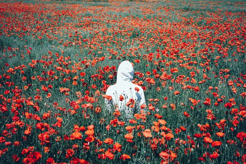 Centered Poppy Poppy Flowers Poppy Field One Man Only One Person One Man Only Hood Hoodie Hood - Clothing High Angle View Day Nature Outdoors An Eye For Travel Love Yourself Press For Progress This Is Masculinity Summer Exploratorium The Great Outdoors - 2018 EyeEm Awards The Traveler - 2018 EyeEm Awards