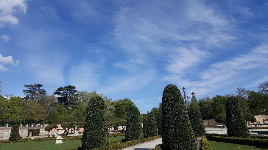 Trees in park against blue sky