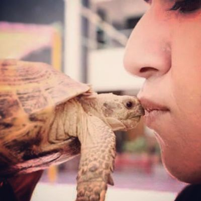 Kissing a Baby Sulcata Tortoise reptiles cute pets instapets crazy me crawlers TheWildlifeExperienceCenter wildlife enthusiast karachi pakistan