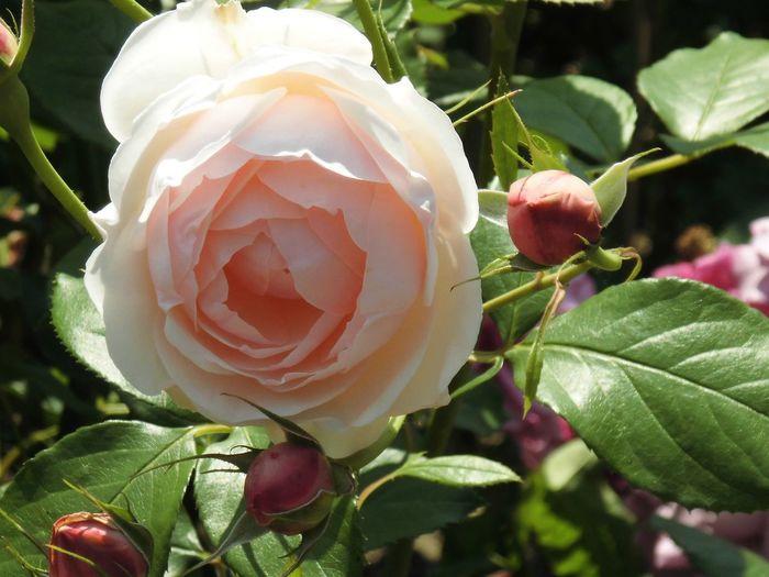 はな 華 花 ばらバラ 薔薇
