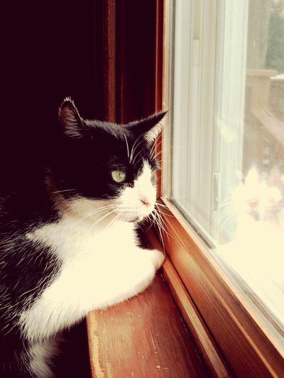 Enjoying the view ✨ Cute Cat
