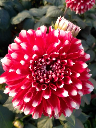 Petal Flower Head Flower Beauty In Nature Close-up Growth Freshness