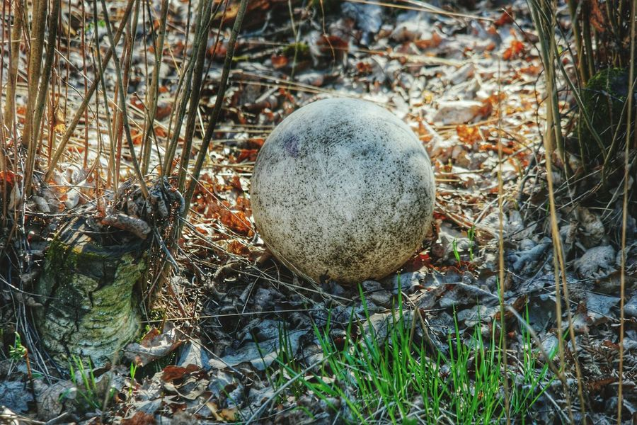 Ball Forgotten Things Forgotten Toys Forgotten Balls Things I Saw Today Found This