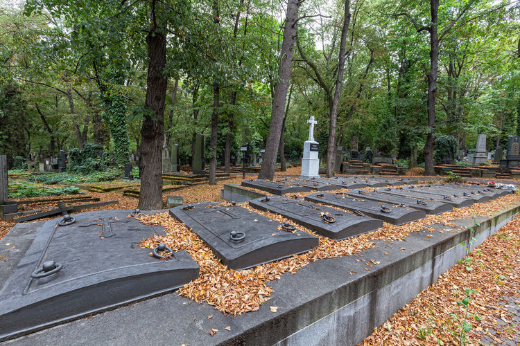 View of cemetery in park