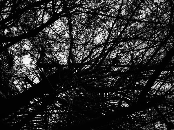 Still Alive Blackandwhite Tree Low Angle View Branch Silhouette Growth Nature Beauty In Nature No People Day Backgrounds Outdoors Sky Freshness