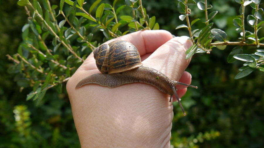 Close to nature Nature Nature Photography Snail Snail Shell On My Hand Check This Out Close Up Close Up Nature EyeEm Gallery EyeEm Of The Week In My Garden Nature Diversities
