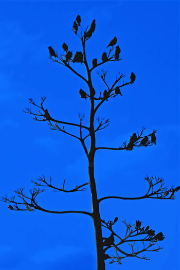 Bird Blue Branch Day Group Of Animals Low Angle View Sillhouette Sky Tranquility
