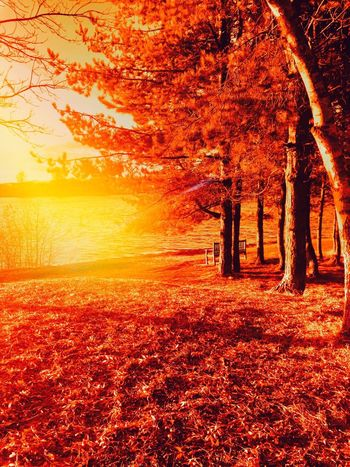 Colour Therapy Tree Orange Color Autumn Nature Change Beauty In Nature Leaf Tranquil Scene Scenics Sunset Sunlight Tranquility No People Outdoors Maple Leaf Maple Sky Day