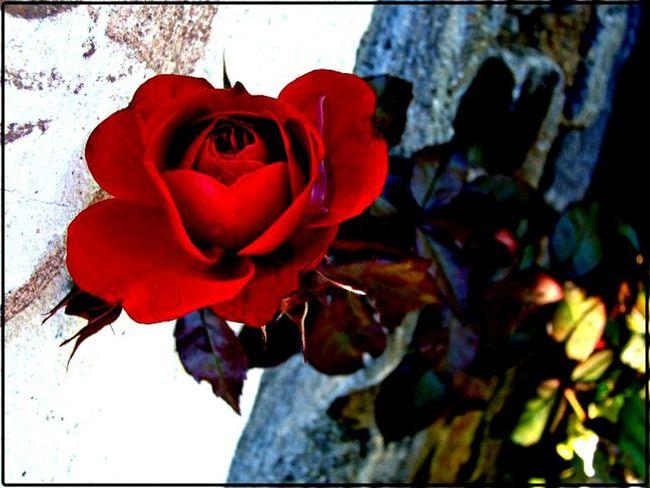 Flowers Nature Overedited