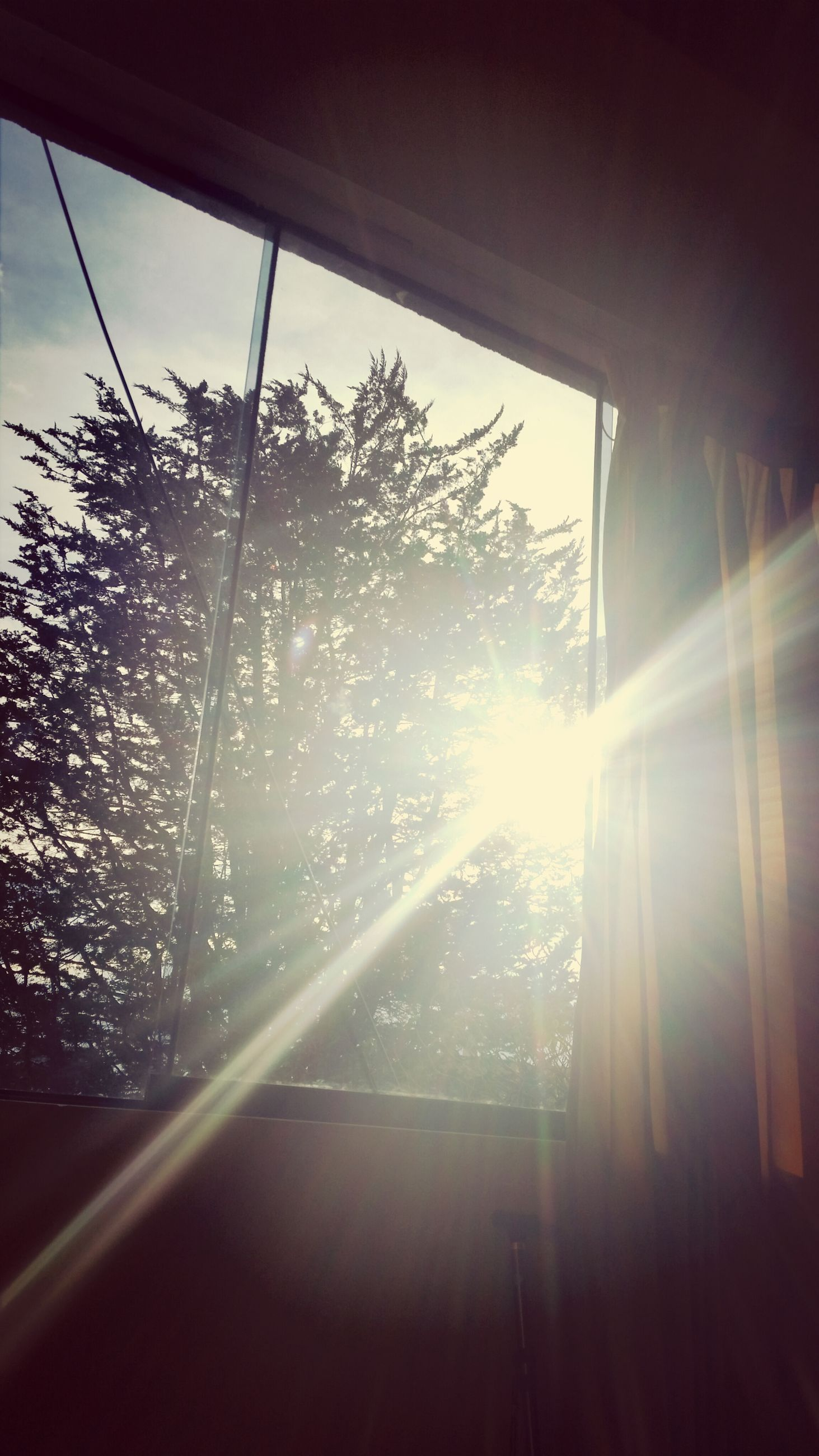 window, indoors, sunbeam, sun, sunlight, glass - material, tree, lens flare, transparent, built structure, day, architecture, bright, nature, looking through window, growth, curtain, no people, sunny, glass