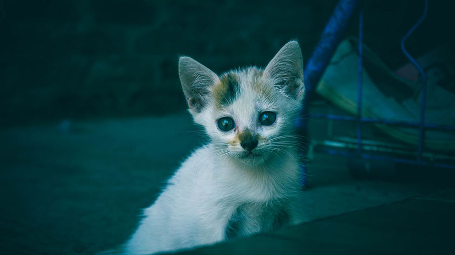 Close-up portrait of kitten by cat outdoors