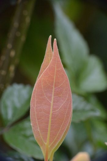 Leaf Focus On Foreground Day Nature Close-up Outdoors No People Growth Fragility Beauty In Nature Autumn Freshness