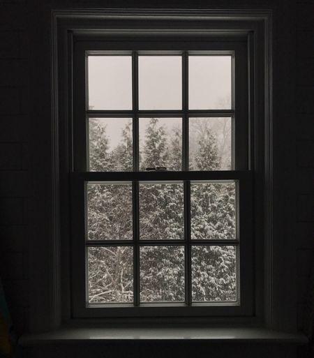 Window Indoors  Day Tree No People Winter Wintertime