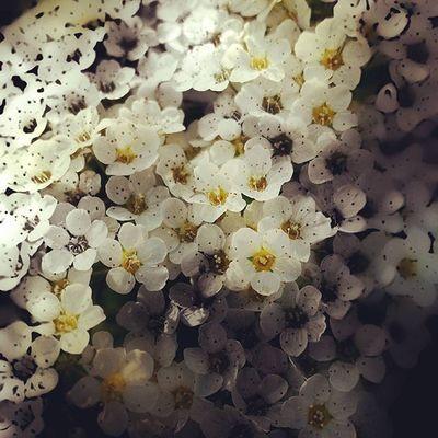 Photo Flowers Blackandwhite черноебелое черноебелоефото Art White Beautiful Nature Spring Sunshine