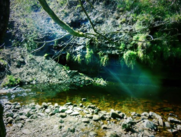 Beauty In Nature Day Flowing Forest Growth Hebden Bridge Idyllic Landscape Majestic Majestic Nature Nature No People Non Urban Scene Non-urban Scene Outdoors Remote Rock Rock - Object Scenics Stream Tranquil Scene Tranquility Tree Water WoodLand