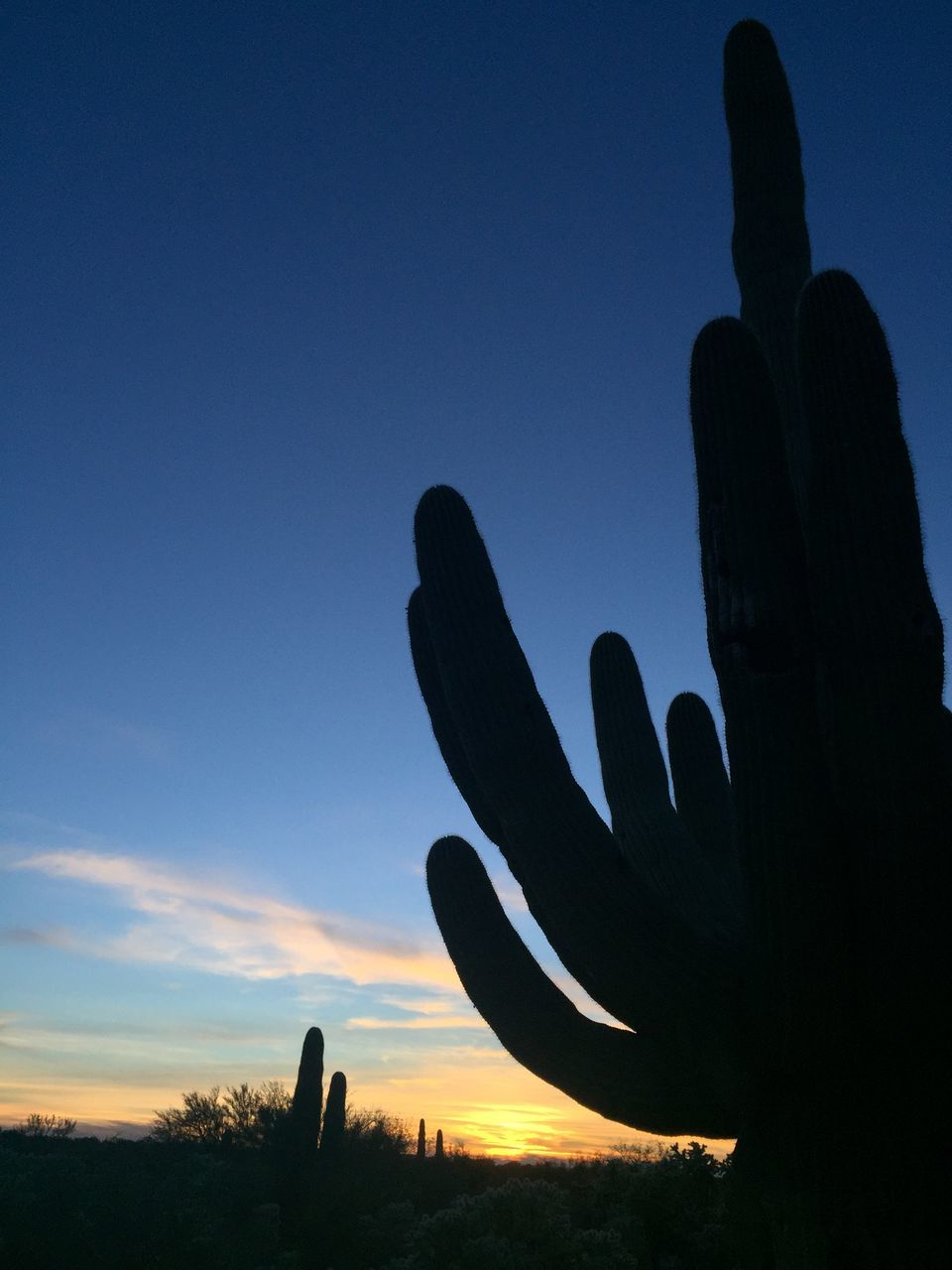 sunset, silhouette, nature, scenics, sky, cactus, beauty in nature, saguaro cactus, outdoors, growth, tranquility, human body part, one person, close-up, day, people