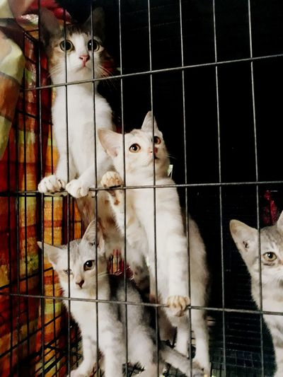 what's up ?? Furry Catinside Pets Catlooking Cat Cage Cats Close-up Livestock