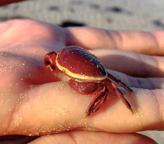 Close-up Crab Red Crab Animal Nature Beauty In Nature The Week On EyeEm