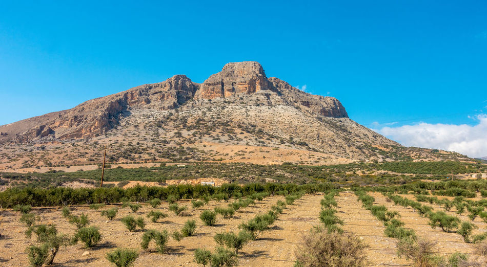 Scenic Mountain near Myrtos on the greek island Crete Crete Myrtos Mountain Scenics Lasithi Lasithi Plateau Ierapetra Olive Tree Summer Nature Kolektos Greece Island