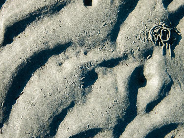Animal Tracks Beach Close-up Day Lug Worms Marine Life No People Outdoors Sand Ripples Sea Life Sea Shore Worm Casts Worm Holes