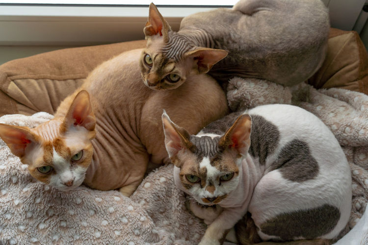 Cats relaxing